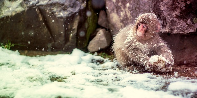 monkey-with-snow